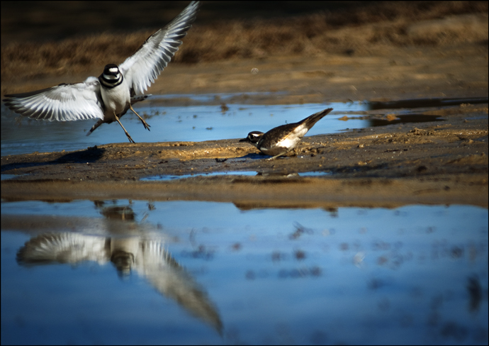 Birds|James