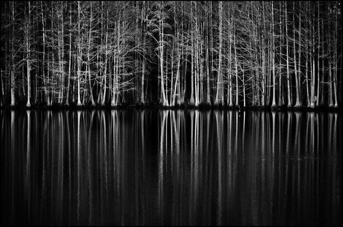 Trees|James
