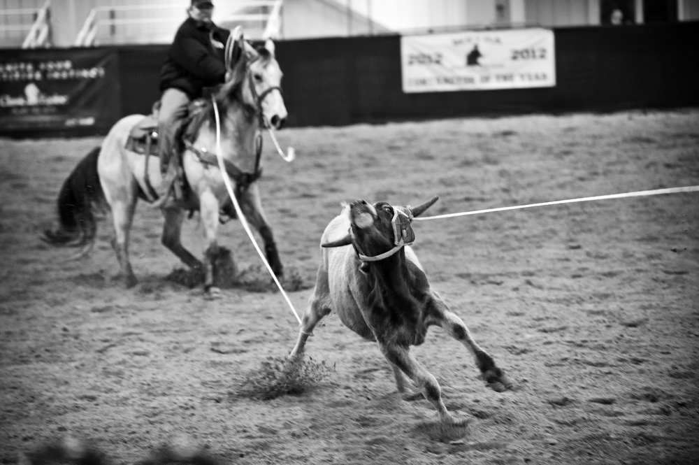 Steer Roping|James Robinson