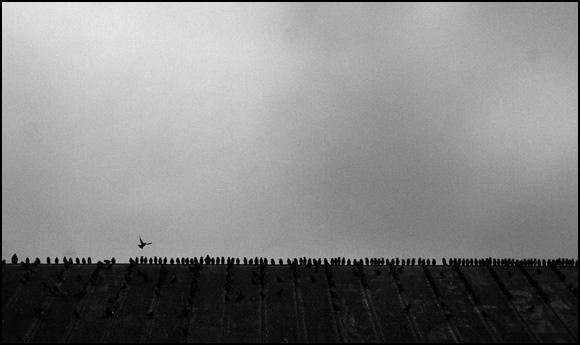 Birds  James Robinson